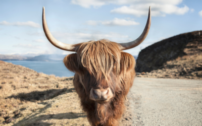 Four gorgeous Scots Gaelic words and their origins